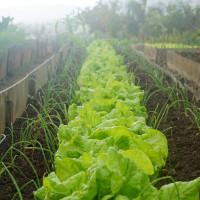 Georgia Pre-K Program Enhances Student Learning With Farm Stand